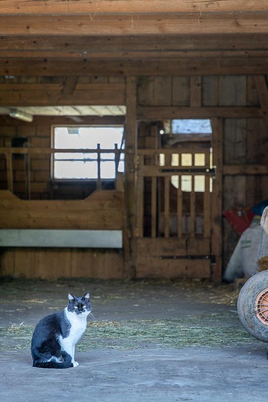 Katze des Bauernhofs