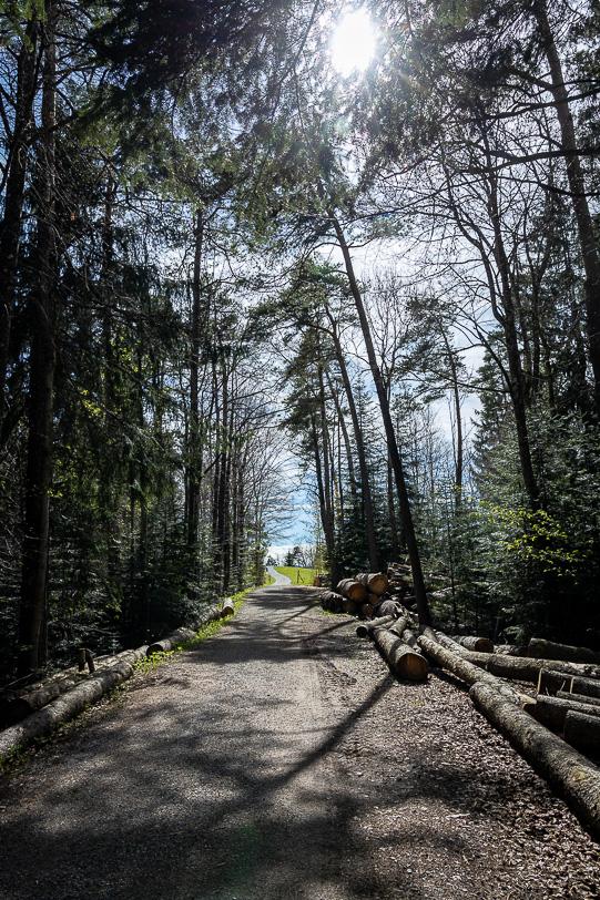 """Waldstück des Wanderwegs """"Rond om Tegersche"""""""