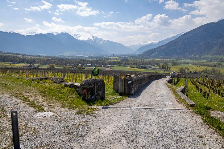 Weinberg mit Aussicht auf Rothorn, Hochwang, Ful Berg, Montalin und Stätzer Horn