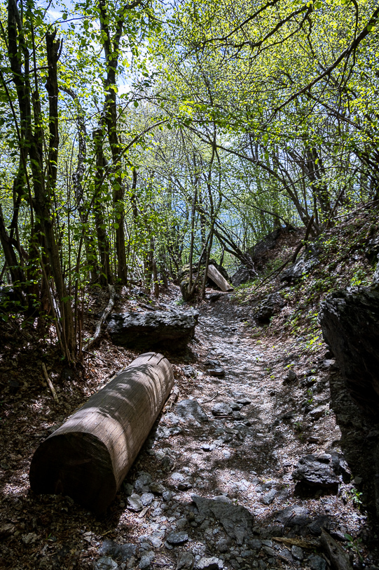 Wanderweg im Wald bei Corticiasca