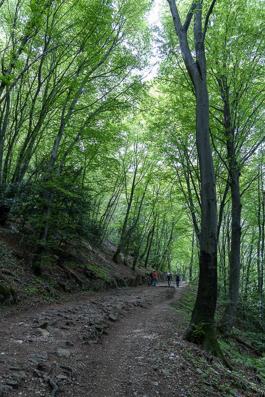 Wanderweg durch den Kastanienwald