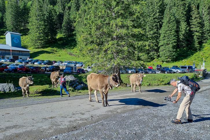Walter und Alex fotografieren Kühe