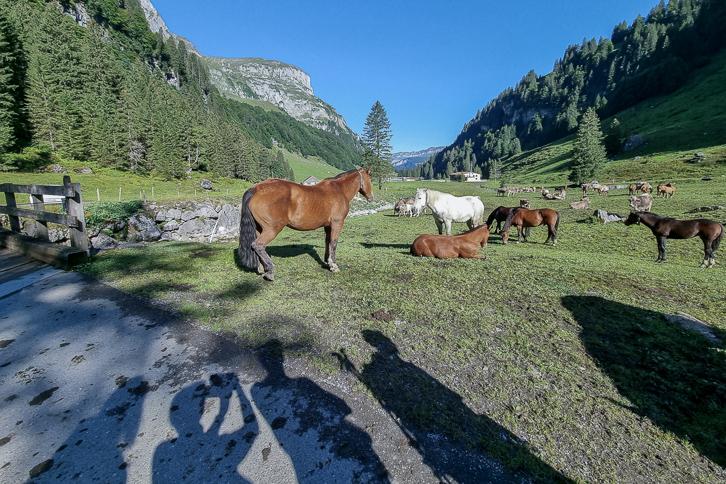 Schatten-Selfie mit Pferden