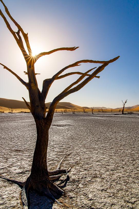 Tote Bäume des Deadvlei bei tiefstehender Sonne