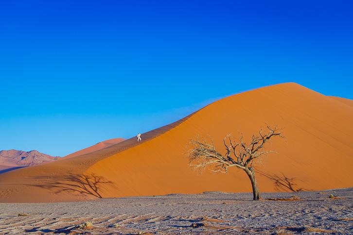 Kameldornbaum mit Schatten und Wanderer bei Düne 45