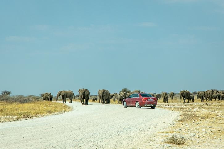 Audi PW vor einer Elefantenherde im Etosha-Nationalpark