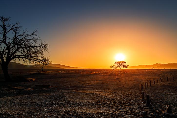 Kameldornbäume im Sonnenuntergang beim Parkplatz von Düne 45