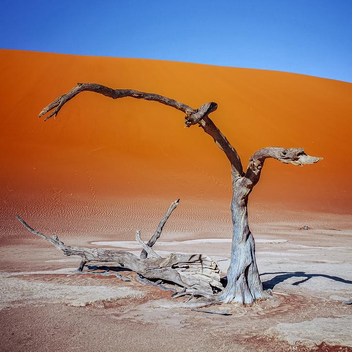 Toter Baum des Deadvlei bei Sossusvlei in Namibia