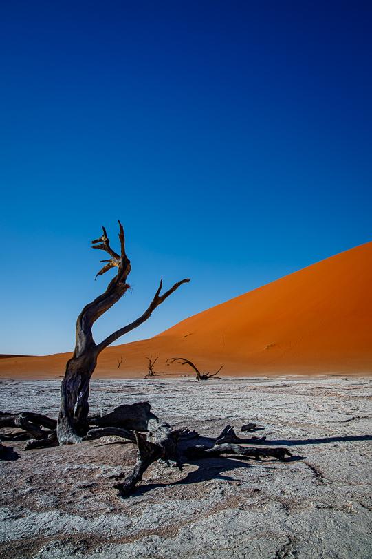 Tote Bäume des Deadvlei bei Sossusvlei in Namibia