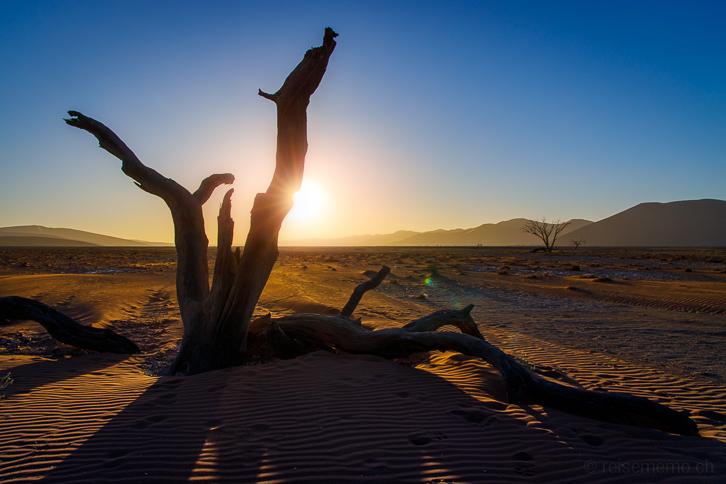 Sonnenuntergang hinter totem Baum in Sossusvlei